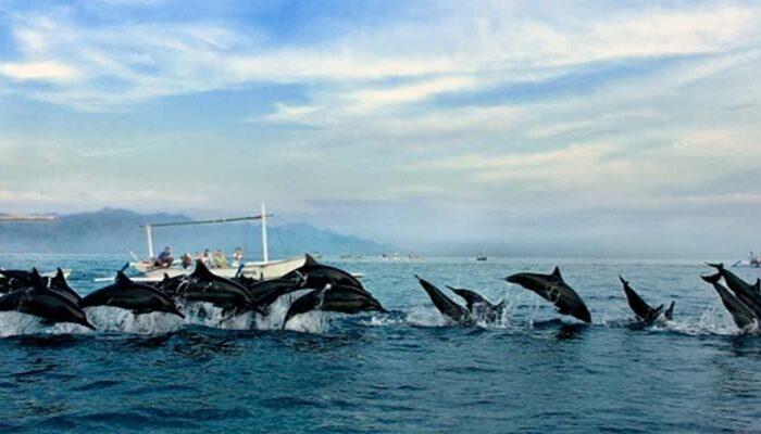 Pemandu Wisata Dolphin di Lovina bersama Kadek Bolang