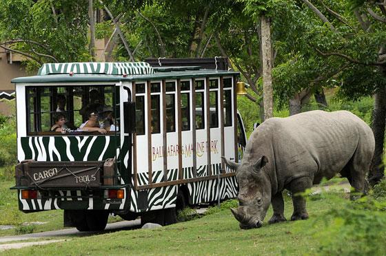 Taman Safari Bali Terkini