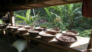Kopi Luwak Baturiti