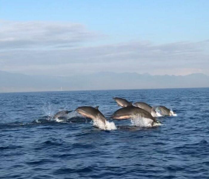 Jasa Penyewaan Perahu di Pantai Lovina – Start 78 Ribuan